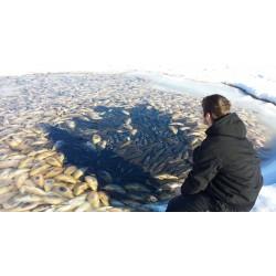 Žuvų žiemojimas vandens telkinyje